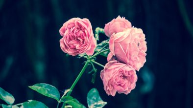 oživit zahradu