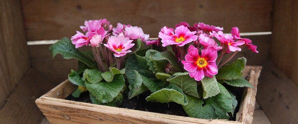Truhlík pro samostatný růst květin
