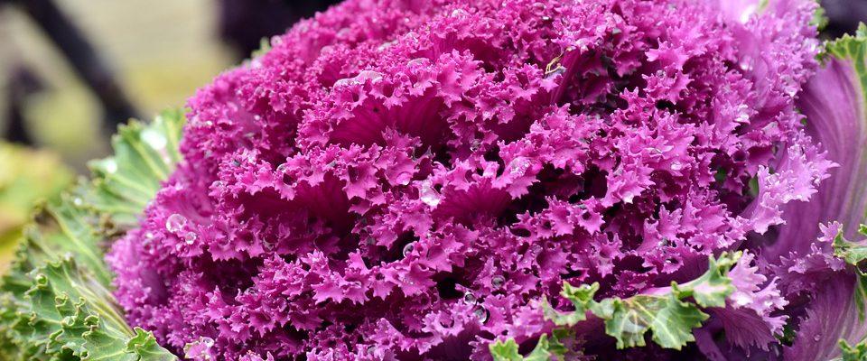 Květiny na skalku