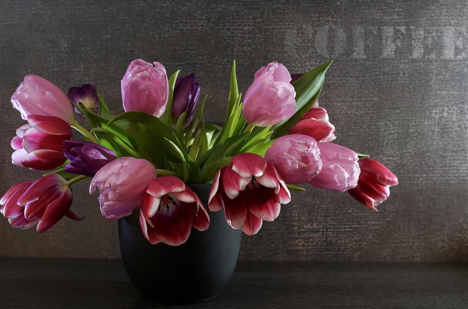 Péče o zimní tulipány