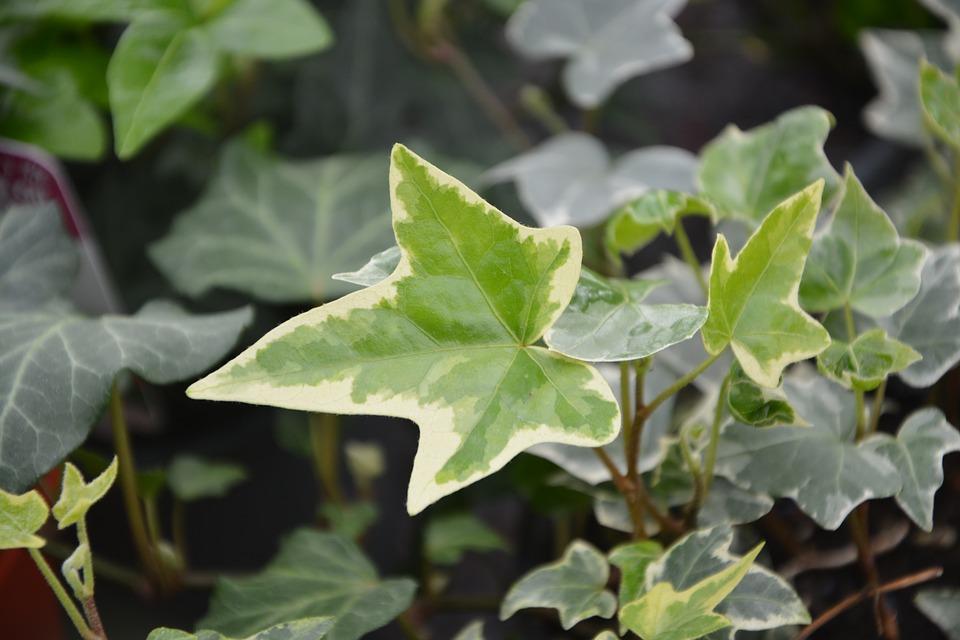 Stinné pokojové rostliny