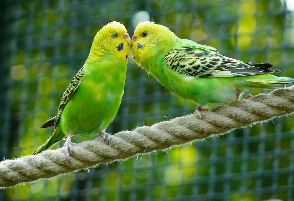 Voliéra pro ptáky