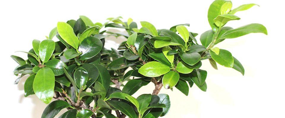 Pokojové rostliny, které vám zajistí peníze i zdraví
