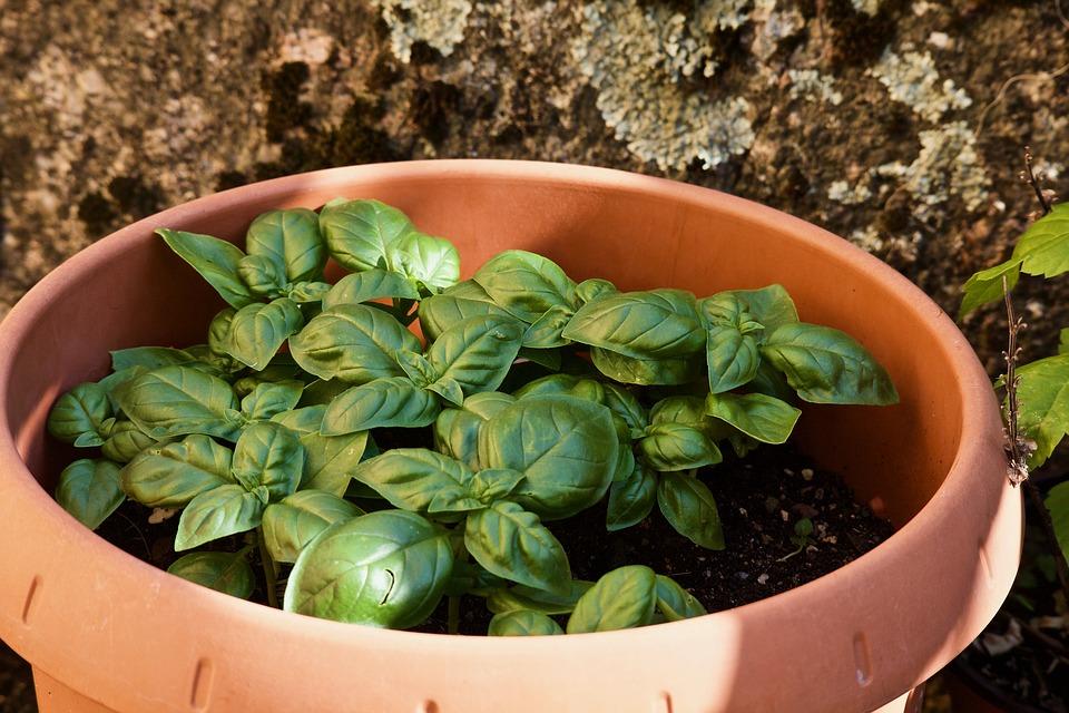 Bylinky patří na balkon. Jaké na balkoně pěstovat?