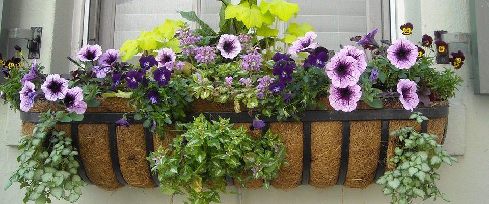 Sedm nejhezčích balkonových květin do truhlíku. Zasaďte si jednu z nich