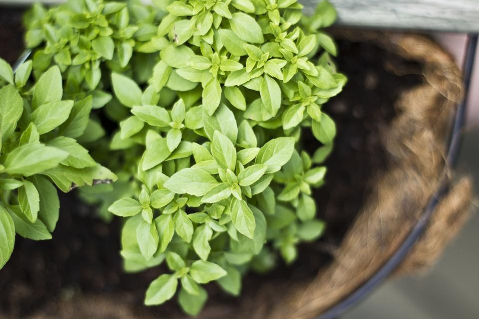Bylinkové zahrádky do každého domova. Proč je zakládat a jaké bylinky pěstovat?