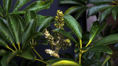 Pokud nemáte dar pěstovat rostliny zkuste to s těmi nezničitelnými. Jaké to jsou?