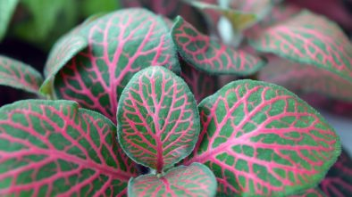 Nekvetoucí rostliny s dekorativními listy. Jaké jsou nejhezčí?