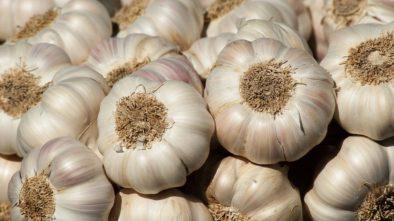 Pěstujeme česnek, přírodní antibiotikum