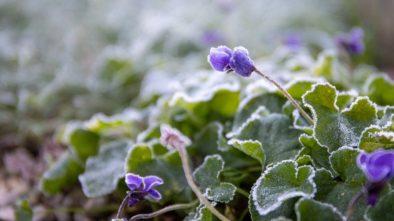 Jak během zimy pečovat o okrasnou a užitkovou zahradu?