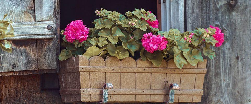 Jak se starat o balkonové květiny?