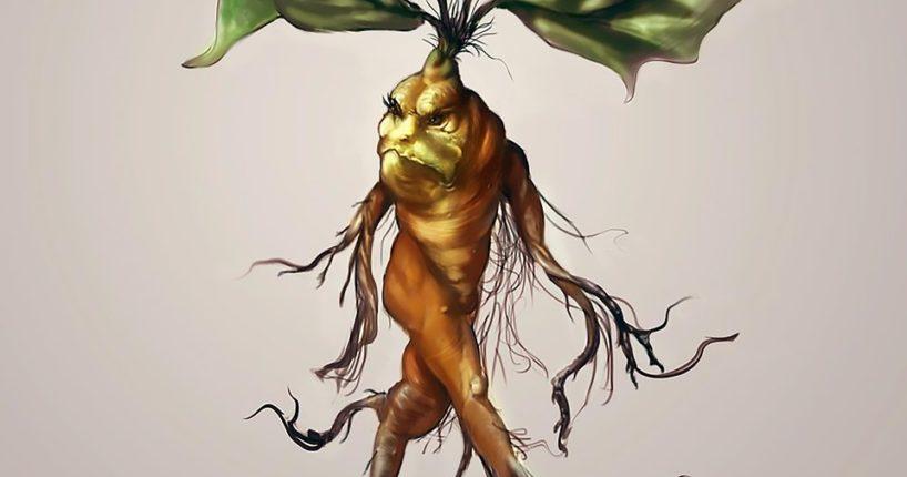Magická mandragora jako nejstarší léčivka světa